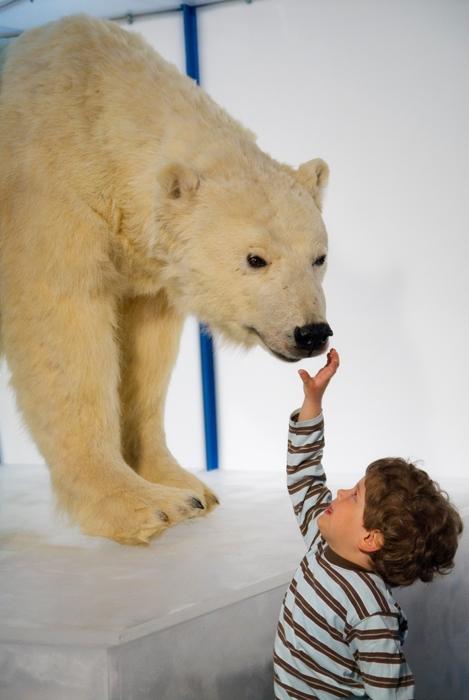 Арктикум -музей в Лапландии