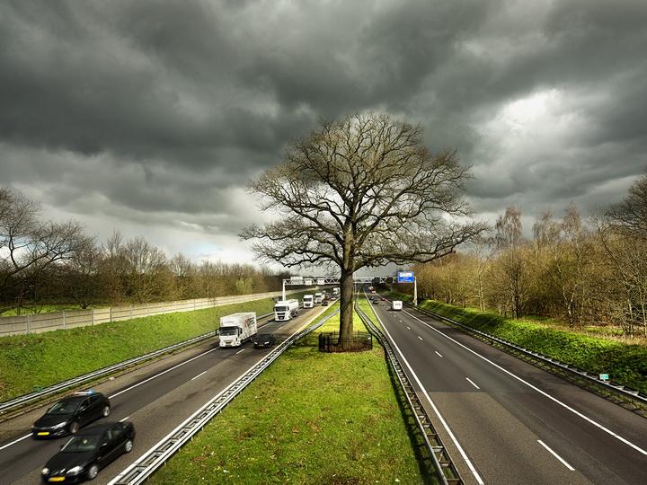 Европейское Дерево 2019 года